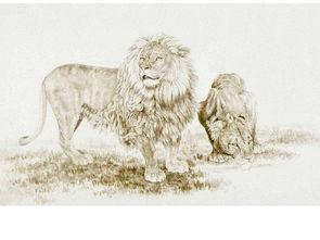 手绘素描绘画狮子脸部特写KTV背景墙