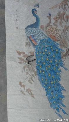 我最近画的孔雀