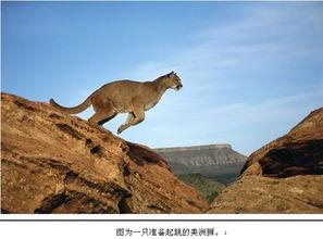 美国宣布美洲狮灭绝 曾被誉为印第安人保护神