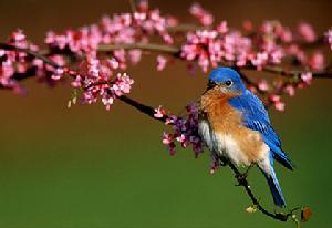 知更鸟 各类 动物 名称