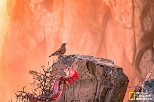 gvg红太阳-秋天,是泰山色彩最丰富的季节.   黄栌、五角枫、花楸叶红似火;银...