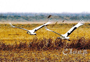...季旅游 湿地观候鸟 北方候鸟天堂