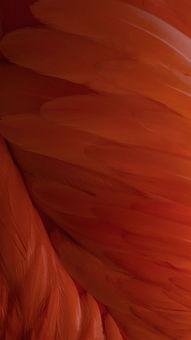 苹果IOS10官方内置壁纸 红色 羽毛 苹果手机高清壁纸 1080x1920 爱思...