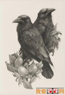 精美的禽鸟素描作品欣赏 4