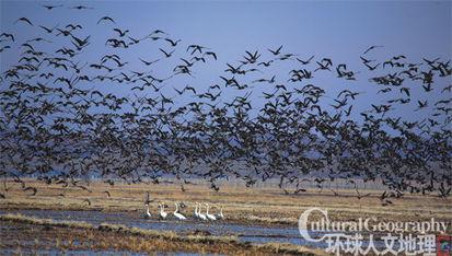 候鸟-兴凯湖 中俄界湖的隐秘传奇