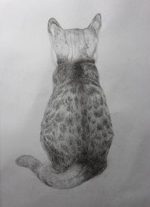 猫小萌素描画