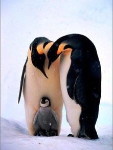 人与动物 全世界20大性爱奇闻盘点