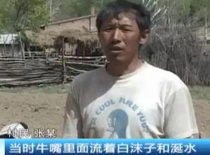 ... 岚县一村妇在玉米地里撒农药 多头牛羊被毒死