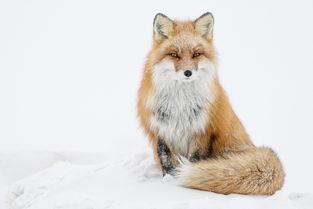 来自俄罗斯的摄影师 Ivan Kislov拍摄了一系列俄罗斯北部楚科奇这个寒...