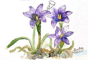 3月12日生日花语 沙洲蕃红花