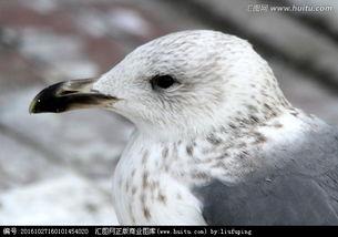 候鸟,鸟类,动物摄影,摄影,汇图网