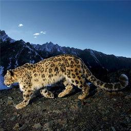 10大濒危动物 世界最后1只雄北白犀 双语