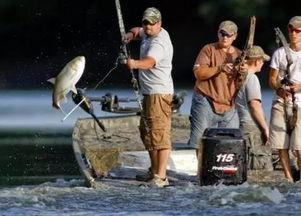 我欲蹦天-这些鱼不但数量多,体型大,还活泼得很,经常蹦跶出水面.在咱们这...