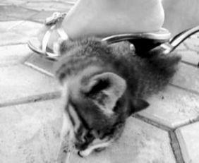 女子穿高跟鞋踩死小猫-高跟鞋踩杀小猫 女子虐猫图激怒网民