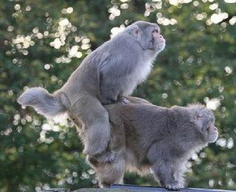 一点都不色!动物就是这样繁衍后代的[组图]-一点都不色 动物就是这样...