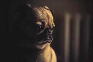 震惊 老板连夜发微信和我说 明天带狗上班