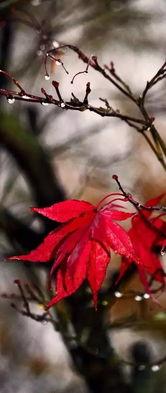 一叶落知天下秋-秋叶那么美,谁还看花