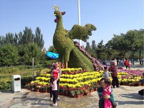漯河开源森林公园菊花展即将开幕图片 64723 600x448-漯河森林公园...