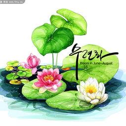 彩绘荷花美图 漂亮的莲花图片
