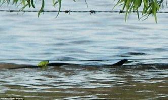...情 蛇驮着青蛙过河
