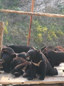 大连森林动物园 成人特惠票大连森林动物园 第一次在驴妈 驴妈妈点评