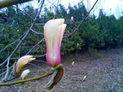 【活动贴】手机摄来春天的花 [复制链接]-手机摄来春天的花