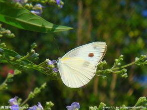 怎么折叠蝴蝶 如何折蝴蝶