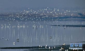 ...响,大批停留在东北地区的候鸟飞抵秦皇岛沿海,使位于候鸟南北迁...