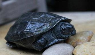 ...种的一般原则和几种常见亲龟的选择要求