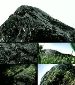 四叶草嫩芽生长生长高清动画视频