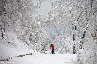 雪景一点红图片