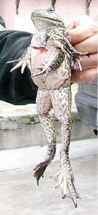 ...面猫 七腿蛙 外星猪