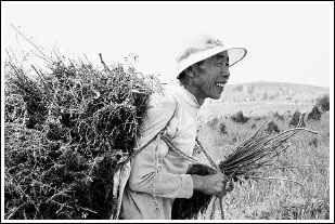 神木林kigurumi 窒息-上午,在榆林市神木县马场梁造林示范区,61岁的当地农民胡买卖站在...