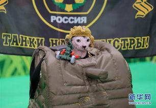"""枪神纪猫小萌h文-3月4日,在俄罗斯莫斯科市举行的""""2017年-萌猫堡""""国际宠物猫展上..."""