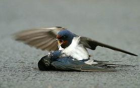 ...只鸟与另一只鸟催人泪下的故事 图文并茂 PHPWind