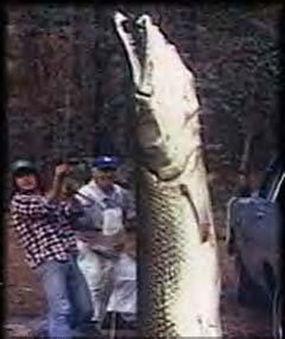 物种变异 那些大的吓死人的动物 7