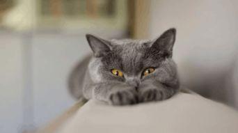 ...养猫,但却不知猫身上所携带的寄生虫也会给人的健康带来威胁.据...