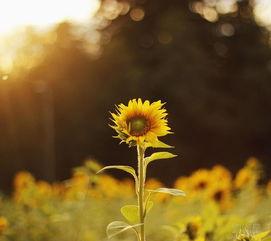 野草诗会 心灵的旅途 献给爱人的早安诗集