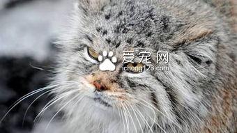 ... 是一只可爱的虎斑条纹猫