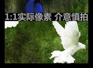 孔雀神秘童话森林玄关