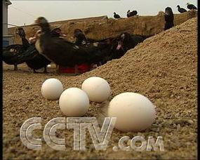 我拿这个鸡有3.5斤到4斤,现在你要是吃这么一个鸡,你得花60多元钱...