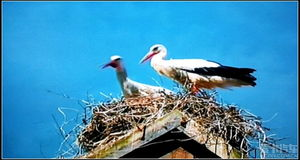 描写鸟的诗句古诗-标题 如诗如画鸟世界