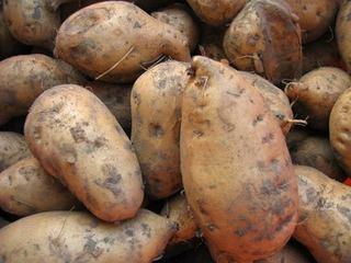 丽岗竹头红蕃薯