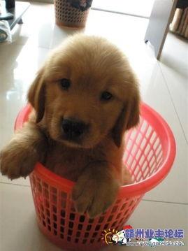 色狗狗-美女 色狗 加精  美女、色狗、加精!