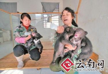...里,与熊妈妈在一起.然而,今年3月的一天,在云南境内的一条高...