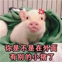 表情 抖音里猪的表情包 qq头像 表情