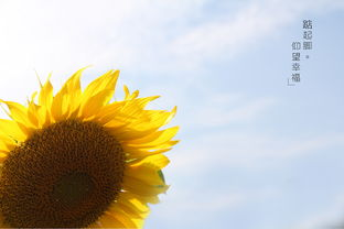 徽州印象 水乡向阳花