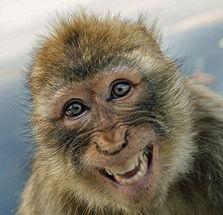 ... 新年新气象,动物也欢笑.英国媒体近日为迎接2012年的到来,特别...