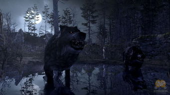 射击游戏 坎贝拉危险狩猎之旅2011 截图