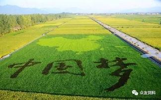 中国农业2017年与未来十年展望